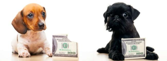 ドッグシッター登録手数料 命あるものを預かる&預けるので何かとお金がかかります